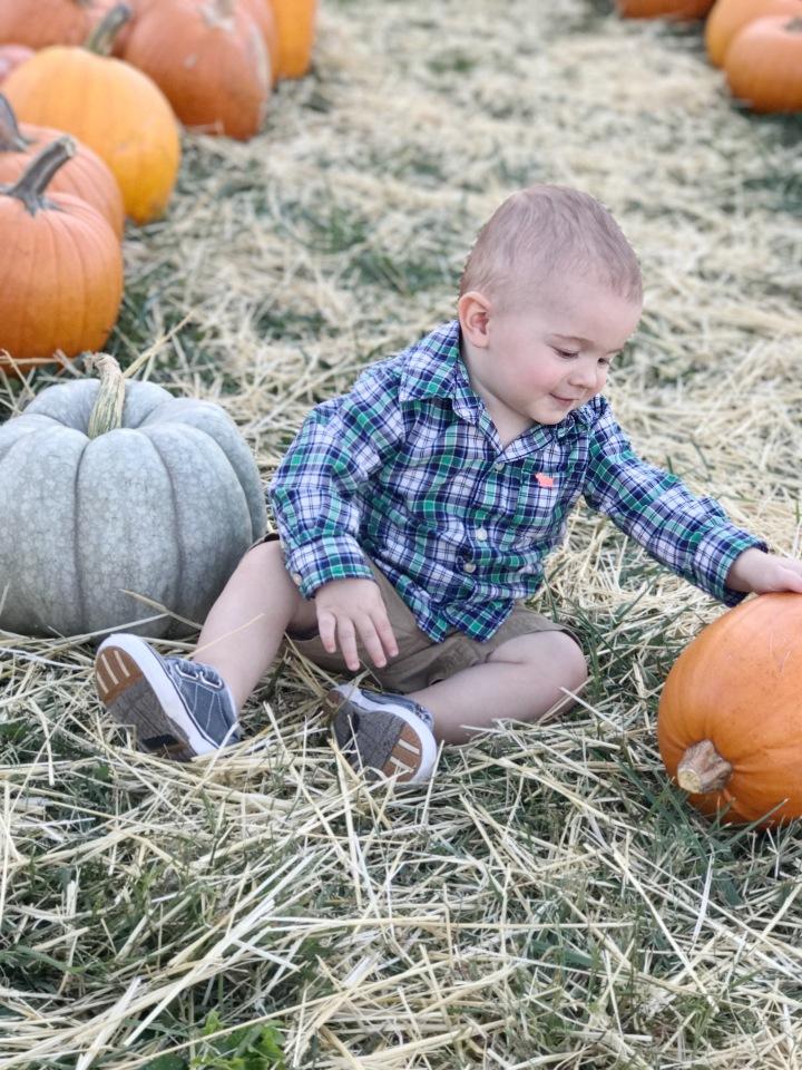 pumpkin-patch-mast-2017-3