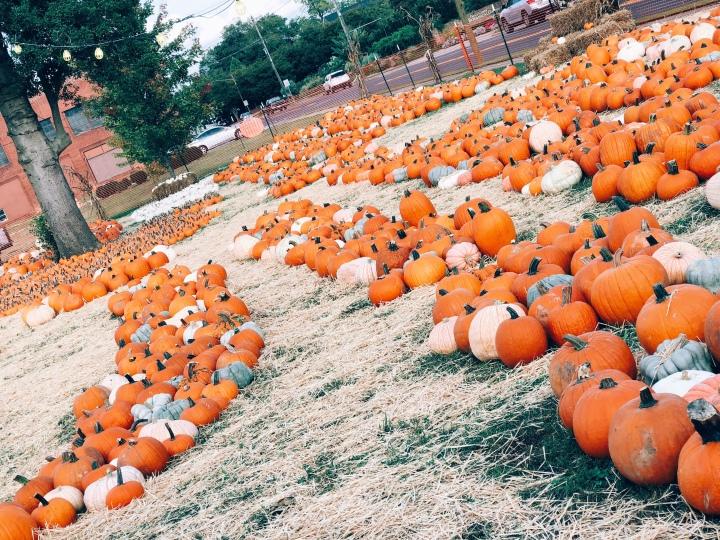 pumpkin-2018-13